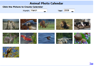 Animal Photo Calendar.png